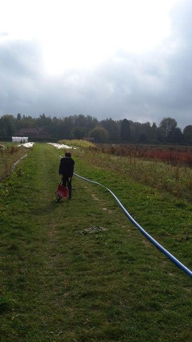 maries_garden-pompoenen_rapen