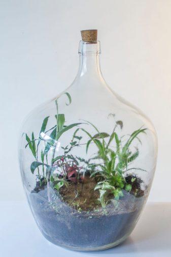 Flessengroen terrarium